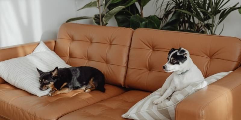 Leather Upholstery Fabric Blog Calgary Interiors (1)