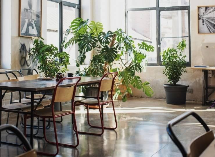office plants work post covid